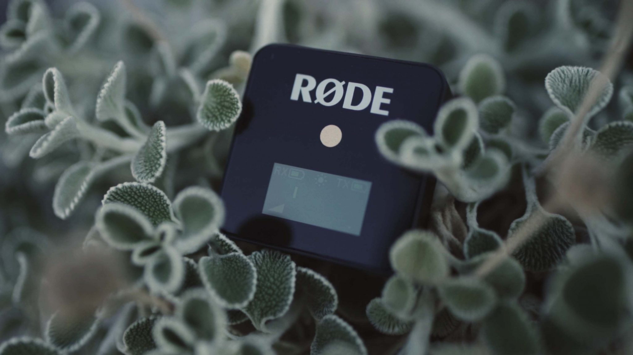 Rode Wireless GO | AOV Gear Highlights